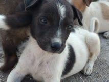 милые щенята Стоковое Фото