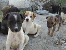 милые щенята Стоковая Фотография RF