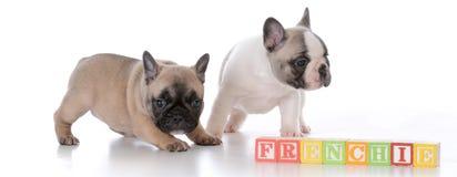 милые щенята 2 Стоковое Изображение RF
