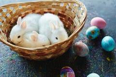 Милые любимчики и яичка Стоковое Изображение