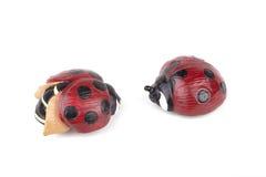 Милые ladybugs Стоковое Фото