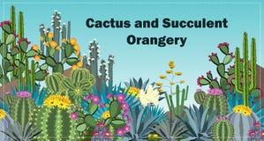Милые succulents и предпосылка orangery кактуса Стоковая Фотография RF