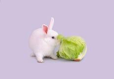 Белый зайчик ест салат Стоковые Изображения