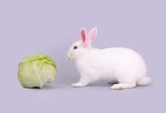 Милый белый зайчик и салат Стоковое фото RF
