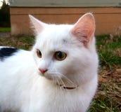 Милый белый кот на траве стоковые изображения rf