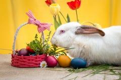 Милый белый кролик пасхи Стоковые Фотографии RF
