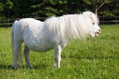 Милый белый пони на paddock Стоковое Фото