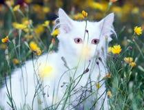 Милый белый пушистый прятать кота стоковая фотография