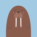 Милый большой тучный морж Стоковая Фотография RF