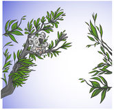 милый вал koala Стоковая Фотография