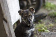 Милый взгляд щенка на вас, умоляет некоторой еде Голодная маленькая собака в vill Стоковые Фотографии RF