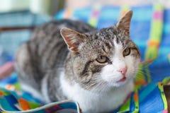 Милый взрослый кот Стоковая Фотография