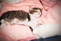 Милый лежать кота киски Стоковая Фотография