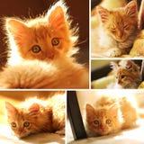 Милый желтый комплект котенка Стоковое Изображение
