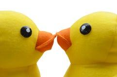 Милый желтый целовать утки Стоковое Изображение
