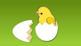 Милый желтый цыпленок ломает раковину яичка, цветков на луге, цыпленке поет мелодию Красивое видео гостеприимсва весны бесплатная иллюстрация
