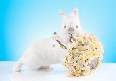 Милый зайчик пасхи играя при плетеная корзина украшенная с пасхальными яйцами Стоковые Фото