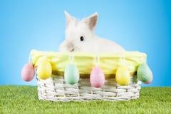 Милый зайчик пасхи сидя в плетеной корзине украшенной с пасхальными яйцами с зелеными хворостинами на заднем плане Стоковое Фото