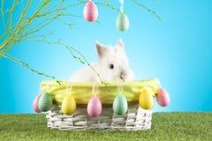 Милый зайчик пасхи сидя в плетеной корзине украшенной с пасхальными яйцами с зелеными хворостинами на заднем плане Стоковое Изображение RF