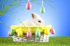 Милый зайчик пасхи сидя в плетеной корзине украшенной с пасхальными яйцами с зелеными хворостинами на заднем плане Стоковые Фотографии RF