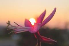 милый заход солнца Стоковая Фотография RF