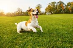 Милый играя скача щенок танцев Стоковая Фотография