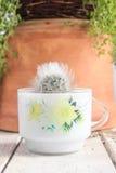 Милый и пушистый в горшке кактус на белой предпосылке таблицы и глины Стоковое Фото
