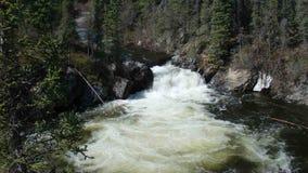 Милый каскад воды в удаленном заросшем лесом положении сток-видео