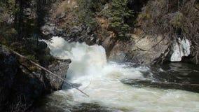 Милый каскад воды в удаленном заросшем лесом положении акции видеоматериалы