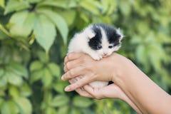 Милый котенок в руках Стоковые Изображения RF