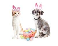Милый котенок и щенок с корзиной пасхи Стоковое Изображение