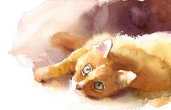 Милый котенок кладя вниз с покрашенной руки иллюстрации портрета кота Tabby любимчика акварели Стоковое Изображение RF