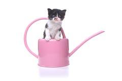 Милый котенок младенца 3 недель старый в чонсервной банке сада моча Стоковое Изображение