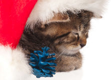 милый котенок немногая Стоковое Изображение