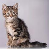 милый котенок немногая Стоковые Изображения RF