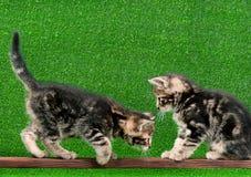 Милый котенок Стоковое Изображение RF