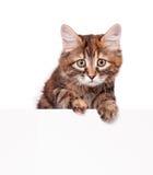 Милый котенок Стоковое Изображение