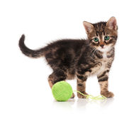 Милый котенок Стоковое фото RF