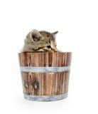 Милый котенок tabby сидя внутри деревянного бочонка на белом backgrou Стоковое Изображение