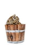 Милый котенок tabby сидя внутри деревянного бочонка на белом backgrou Стоковые Фото