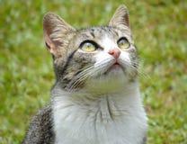Милый кот в саде смотря вверх Стоковые Изображения
