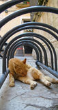 Милый кот в старой улице Стоковые Фото