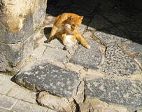 Милый кот в старой улице Стоковая Фотография RF