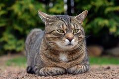 Милый кот лежит и смотрит на саде Стоковое Фото