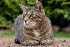 Милый кот лежит и смотрит на саде Стоковые Фото