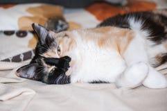 Милый кот лежит на кровати Стоковые Изображения