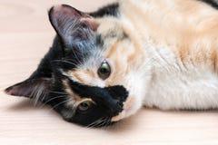 Милый кот лежит на поле Стоковое Изображение RF