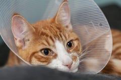 Милый кот имбиря с конусом Стоковые Фотографии RF