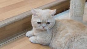 Милый кот коричневого цвета младенца Стоковое Изображение