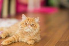 Милый кот на поле Стоковые Изображения RF